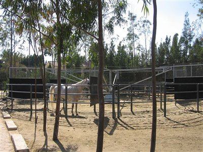 Stables Design and Landscape at Al Sharbatly Stud